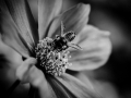tn_wasp