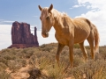 tn_Dave McLeavy - Nikon D300 + Nikkor 16-85mm Wild horse in Monument Valley, Colorado USA