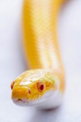 Jill Davies 1 snake_et