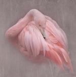 Flamingo-Texture_et