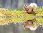 4 Double Trouble! by Marie Rollitt_et