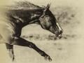 tn_Horse running free mono