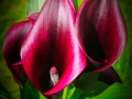 P1050560 (2)flower_et