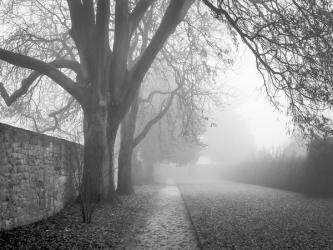 Misty-Morning_et