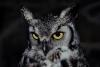 Night-Owl_et