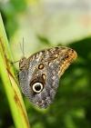 tn_Butterfly 2