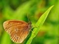 Butterfly_et