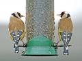 tn_Birds 1