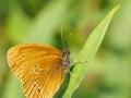 tn_Butterfly 1