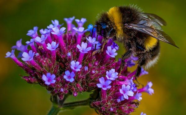 Bee Feeding_et